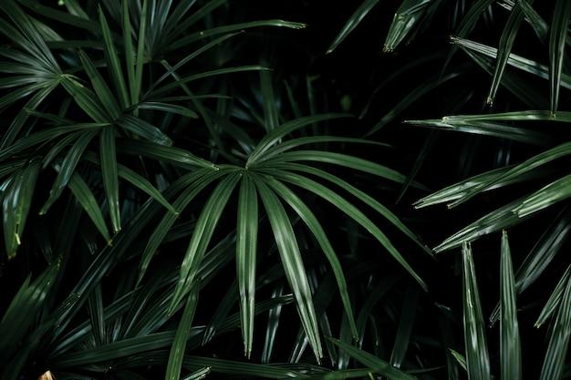 Feuilles de palmier en arrière-plan.