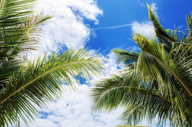 Feuilles de palmier au ciel bleu.