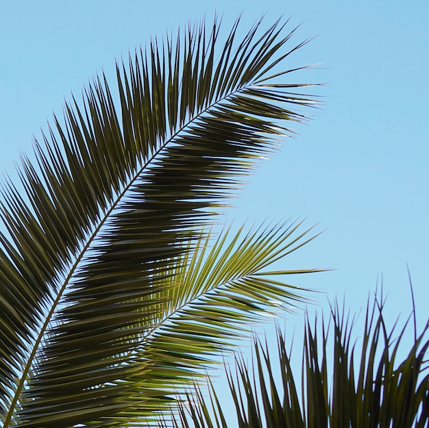 Feuilles de palmier au printemps
