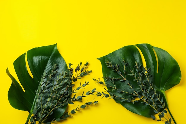 Feuilles de palmier et brindilles sur jaune