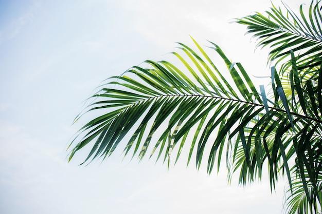 Feuilles de palmier avec un ciel bleu.