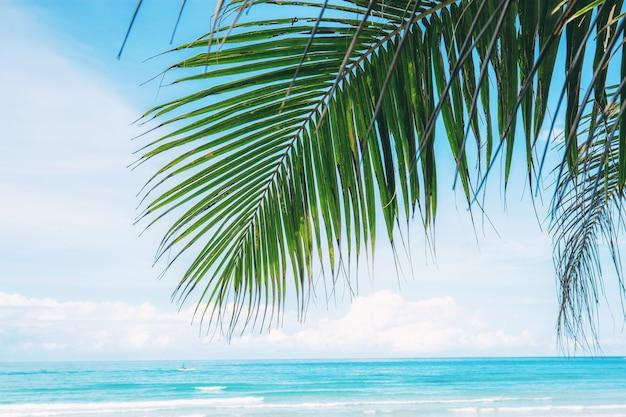 Feuilles de palmier avec le ciel en mer.