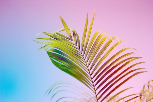 Feuilles de palmier colorées avec ombre sur mur
