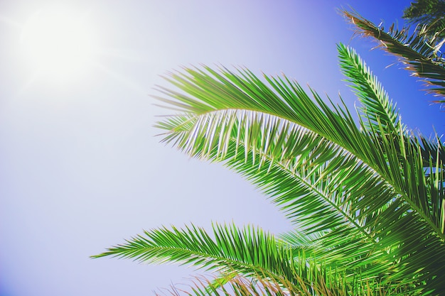 Feuilles de palmier contre le ciel. mise au point sélective. la nature