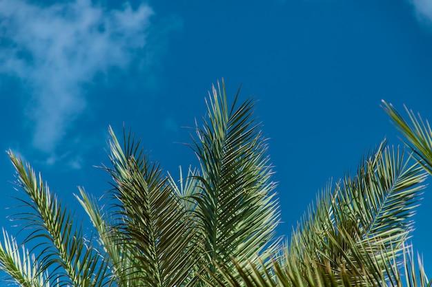Feuilles de palmier contre le ciel. mise au point sélective.