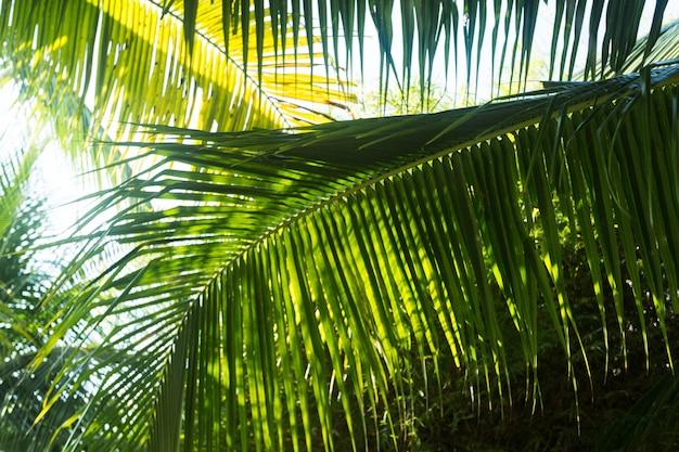 Feuilles de palmier dans le parc