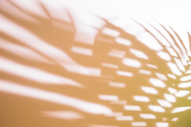 Feuilles de palmier défocalisées sur fond blanc