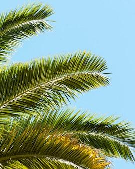 Feuilles de palmier à l'extérieur au soleil