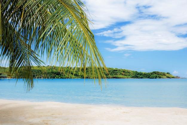 Feuilles de palmier en mer.