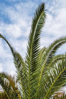 Feuilles de palmier en perspective