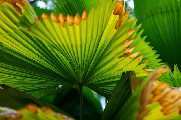 Feuilles de palmier avec des pointes sèches