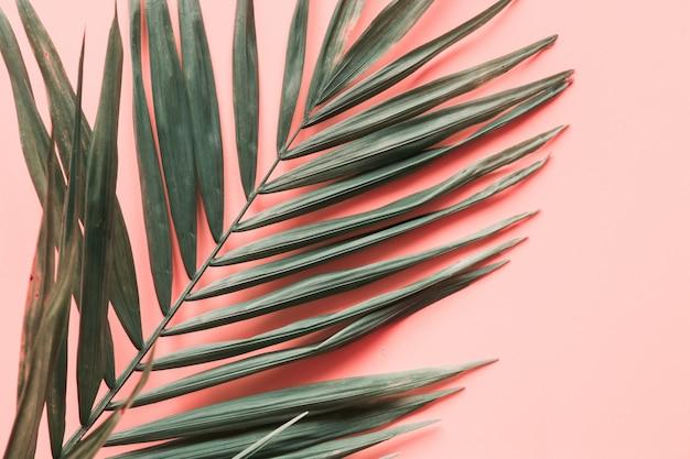 Feuilles de palmier rose
