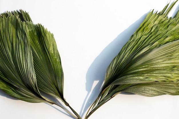 Feuilles de palmier sec tropical isolés