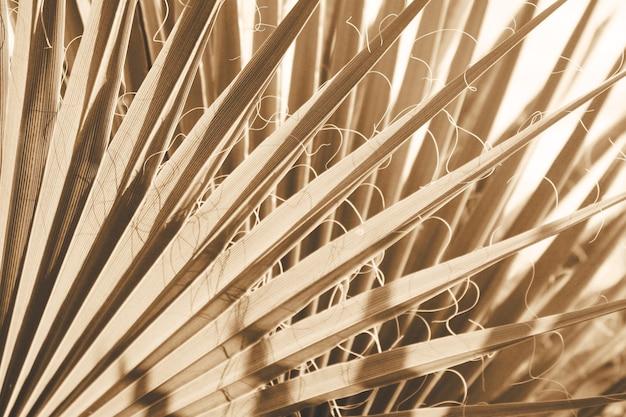 Feuilles de palmier tendance à voile couleur champagne.