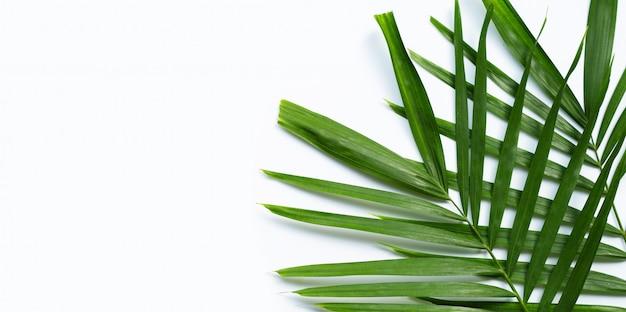 Feuilles de palmier tropical sur blanc.