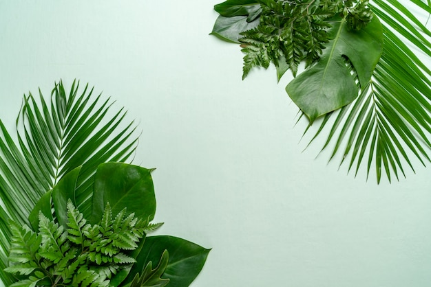 Feuilles de palmier tropical avec espace de copie