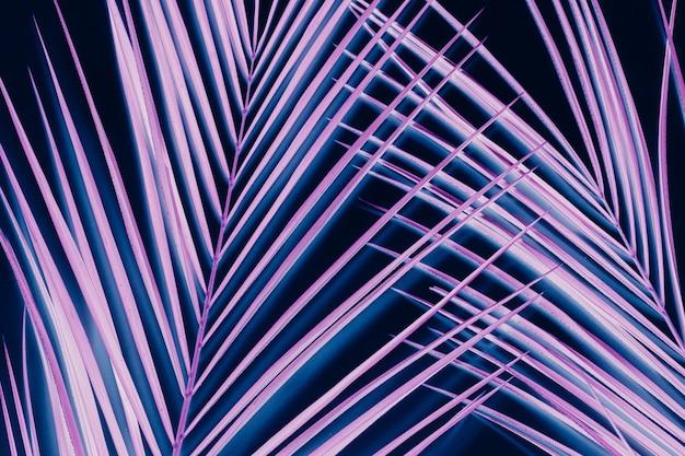 Feuilles de palmier tropical. floral minimaliste