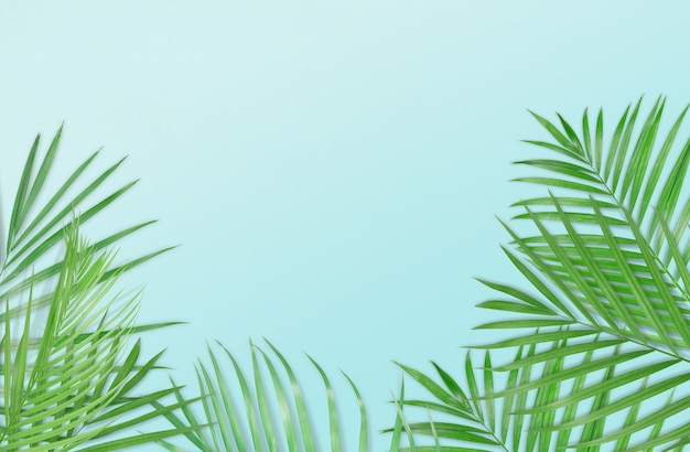 Feuilles de palmier tropical sur fond bleu clair. nature minime été style.