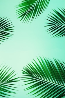 Feuilles de palmier tropical sur fond bleu pastel. concept d'été minime. feuille verte vue de dessus sur papier pastel punchy