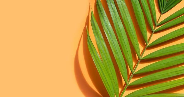 Feuilles de palmier tropical sur fond bleu.