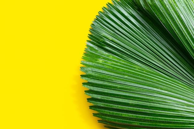 Feuilles de palmier tropical sur fond jaune.