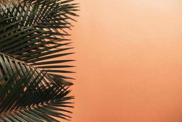 Feuilles de palmier tropical sur fond orange
