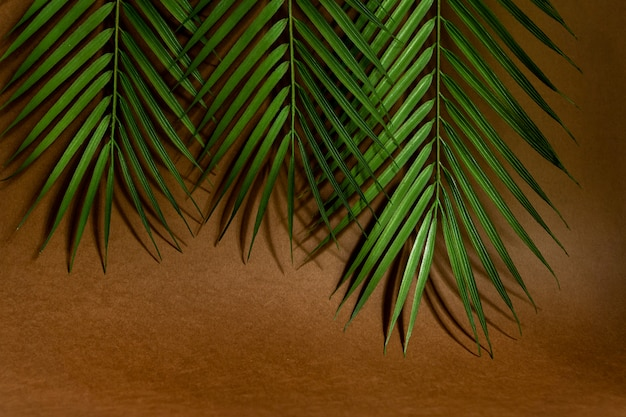Feuilles de palmier tropical sur fond rose. concept d'été minimal. mise à plat créative avec espace de copie.