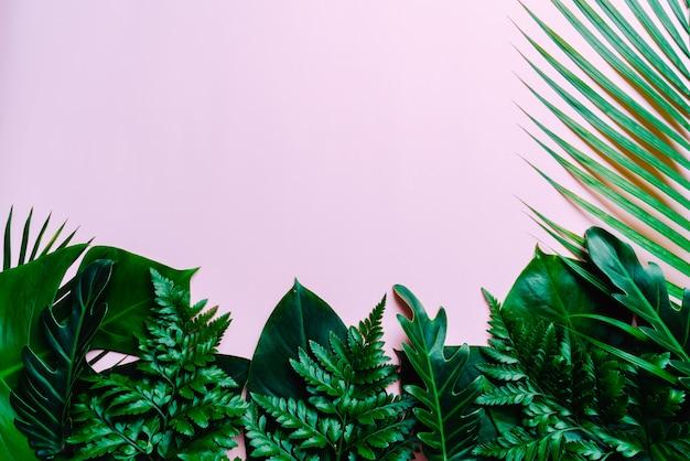 Feuilles de palmier tropical sur fond rose