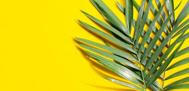 Feuilles de palmier tropical sur jaune