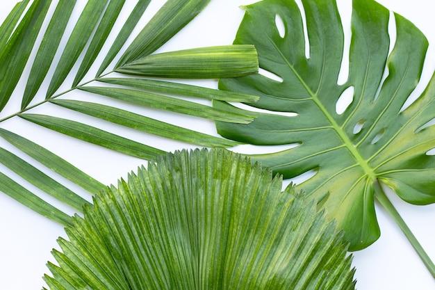 Feuilles de palmier tropical sur surface blanche