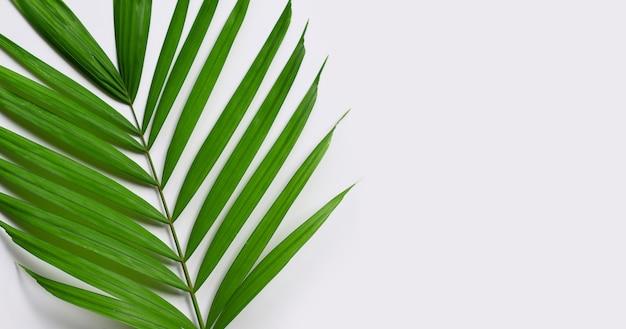 Feuilles de palmier tropical sur une surface blanche