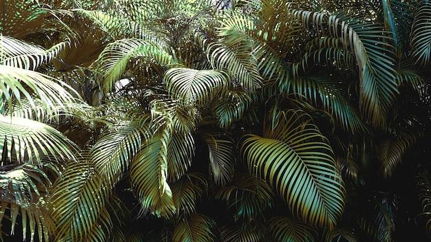 Feuilles de palmier tropical vert, fond de motif floral, vraie photo