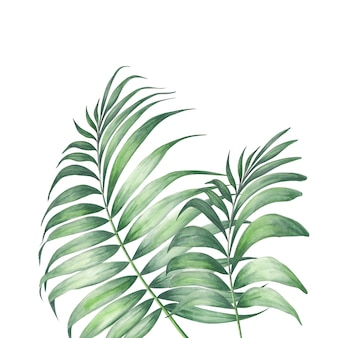 Feuilles de palmier tropique.