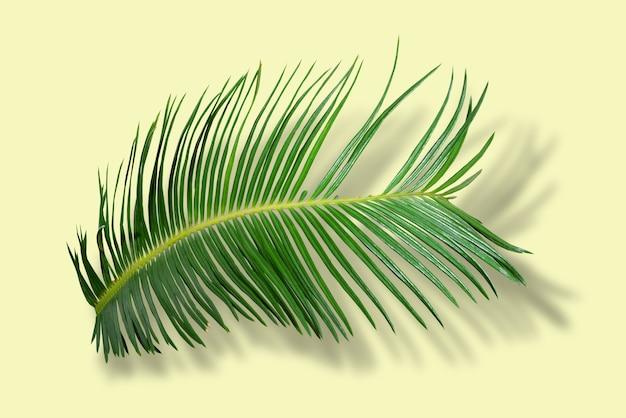 Feuilles de palmier vert dans la forêt tropicale isolée sur fond jaune avec ombre