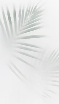 Feuilles de palmier vert flou sur blanc cassé