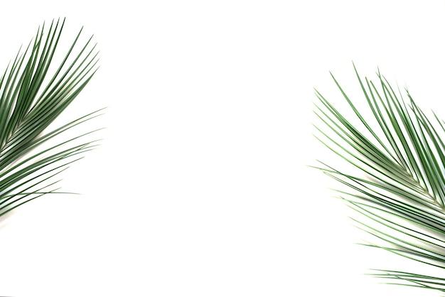 Feuilles de palmier vert tropical sur blanc