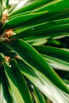 Feuilles de palmier vertes sous les rayons du soleil