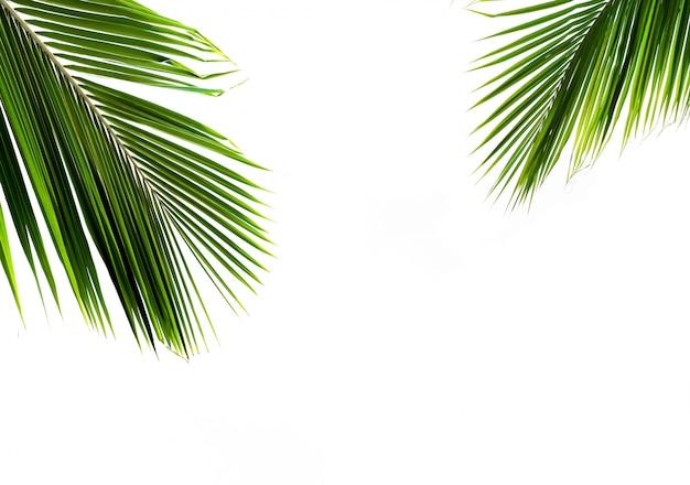 Feuilles de palmiers sur fond blanc