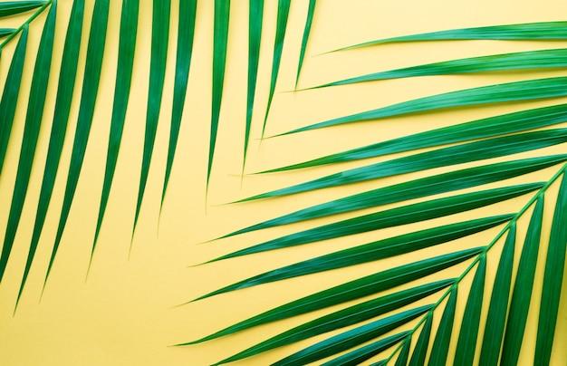 Feuilles de palmiers tropicaux sur fond de couleur pastel