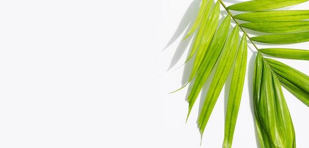 Feuilles de palmiers tropicaux sur une surface blanche. concept de fond d'été