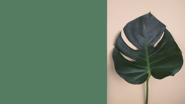 Feuilles de palmiers tropicaux. vue de dessus, espace de copie