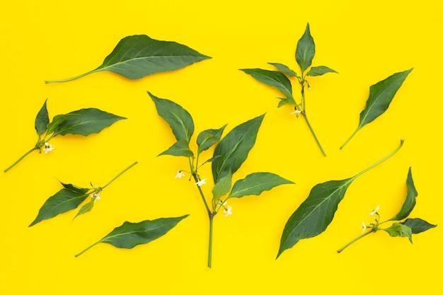 Feuilles de piment avec fleur sur surface jaune