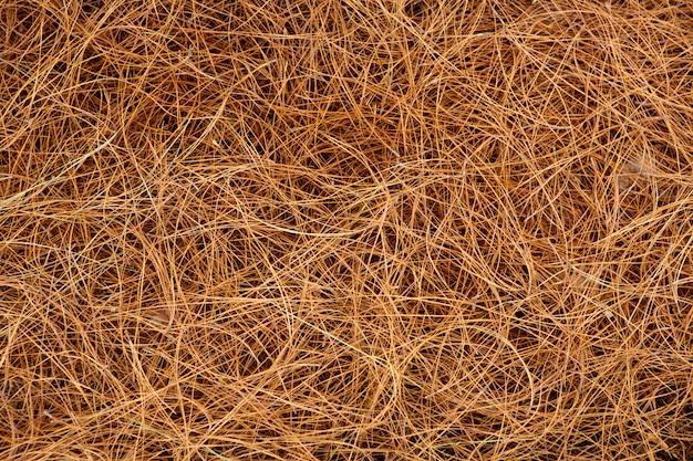 Feuilles de pin séchées aiguilles de fond