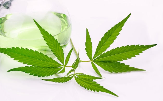 Feuilles de plante de cannabis dans le ballon de laboratoire isolé sur fond blanc. arrière-plan du thème de la médecine.