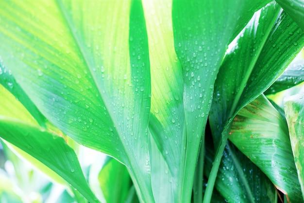 Feuilles plante avec la lumière du soleil.
