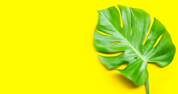 Feuilles de plante monstera sur fond jaune