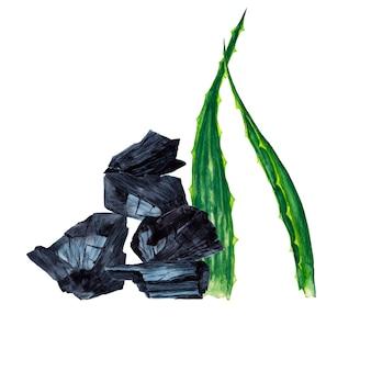 Feuilles de plantes d'aloe vera avec du charbon de bois. peinture à l'aquarelle.