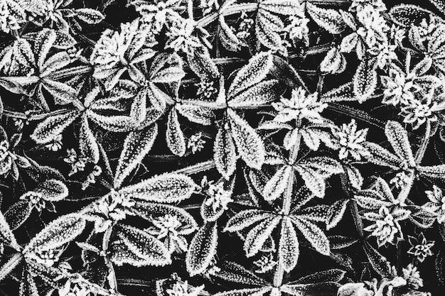 Feuilles de plantes couvertes de givre, vue du dessus