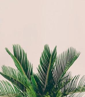Feuilles de plantes tropicales sur fond clair.