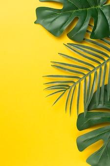 Feuilles de plantes tropicales vertes